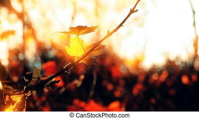 coucher soleil, foliage., arrière-plan., forêt, automne