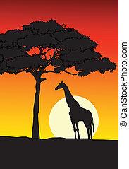 coucher soleil, fond, africaine
