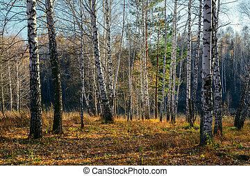 coucher soleil, forêt