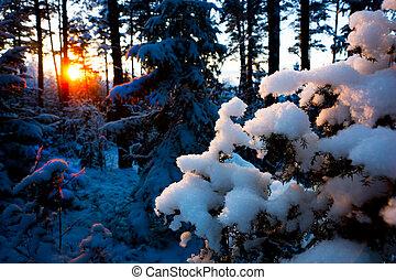 coucher soleil, forêt, scandinave