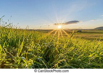 coucher soleil, herbeux, pré