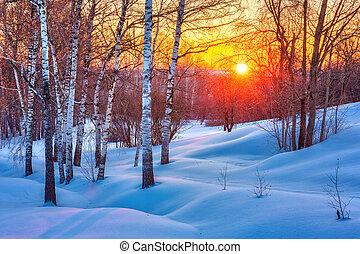 Coucher soleil, hiver, coloré