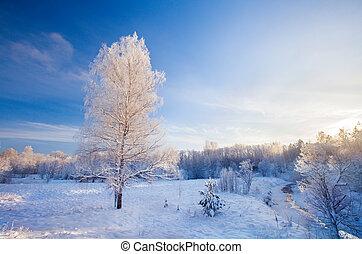 Coucher soleil, hiver