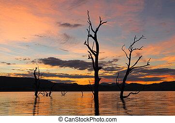 coucher soleil, intérieur, nsw, australie