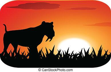 coucher soleil, léopard