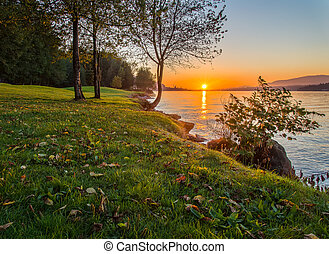 coucher soleil, long, herbeux, rivage