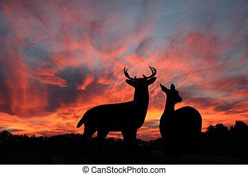coucher soleil, mâle, biche, whitetail, &