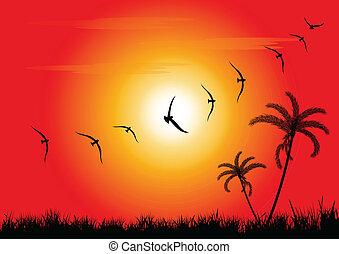 coucher soleil, oiseaux