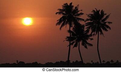 coucher soleil, palmiers, bouée