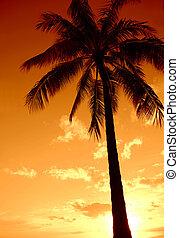 Coucher soleil, paume, arbre, paradis