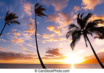 coucher soleil, paume, hawaï, arbres