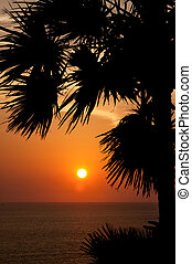 coucher soleil, paume