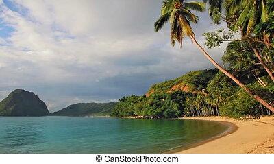 coucher soleil, plage paume, arbres