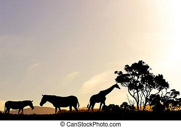 coucher soleil, safari, paysage