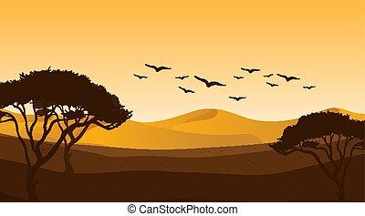 coucher soleil, scène, arbres
