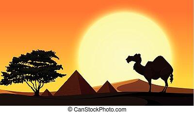 coucher soleil, scène, fond, chameau