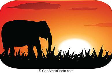 coucher soleil, silhouette, éléphant