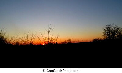 coucher soleil, silhouette, arbres, route