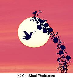 coucher soleil, silhouette, colibri, contre, fleurs