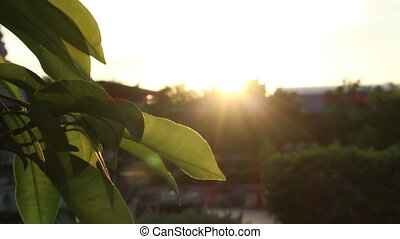 coucher soleil, silhouette, feuille