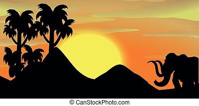 coucher soleil, silhouette, scène, éléphant