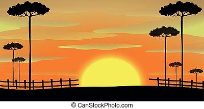 coucher soleil, silhouette, scène, arbres, grand
