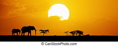 coucher soleil, silhouetted, éléphants