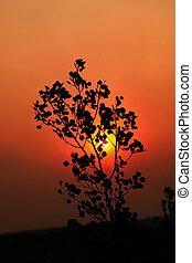 coucher soleil, smokey