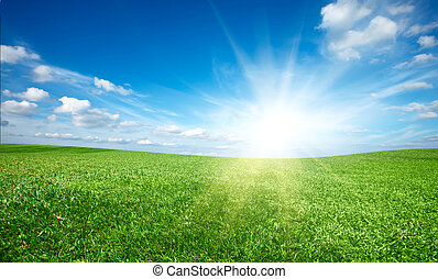 coucher soleil, soleil, et, champ, de, vert, frais, herbe,...
