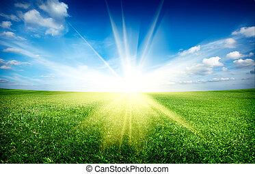 coucher soleil, soleil, et, champ, de, vert, frais, herbe, sous, ciel bleu