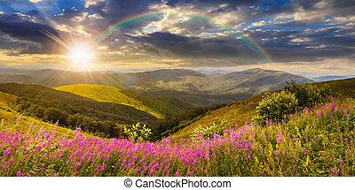 coucher soleil, sommet, fleurs, sauvage, montagne