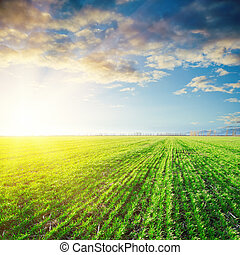 coucher soleil, sur, agriculture, champ vert