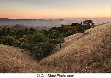 coucher soleil, sur, californie, pré, vallonné