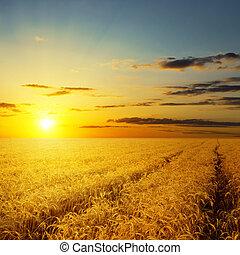coucher soleil, sur, champ agricole