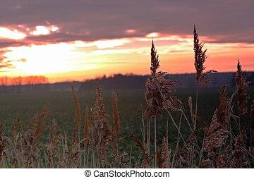 coucher soleil, sur, champ