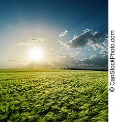 coucher soleil, sur, champ vert