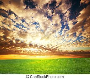 coucher soleil, sur, herbe, champ vert