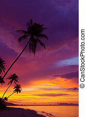 coucher soleil, sur, les, océan, à, exotique, palmiers,...