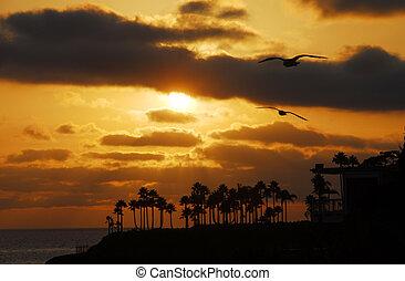 coucher soleil, sur, plage laguna