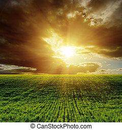 coucher soleil, sur, vert, champ agricole