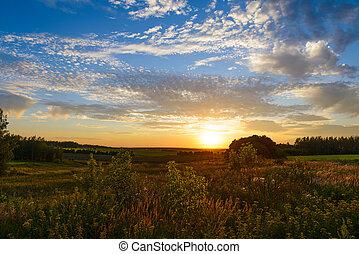 coucher soleil, sur, vert, champs