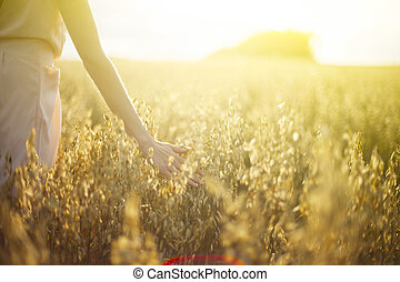 coucher soleil, toucher, pointes, blé, main, brouillé