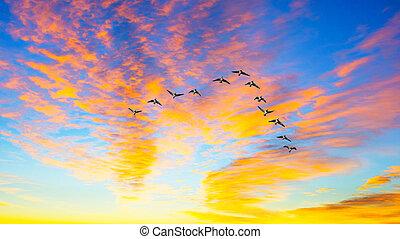 coucher soleil, voler, pendant, canards