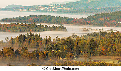 couches, brouillard, forêt, entre