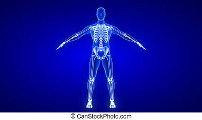 coude, humain, devant, vue., boucle, anatomie, animation, douleur, seamless, -, fond, 3d, balayage, corps, render, bleu