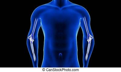 coude, -, humain, douleur, corps, vue, devant, noir, arrière-plan animation, 3d, anatomie, render, seamless, close-up., boucle, balayage, bleu