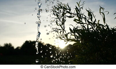 couler, motion., sur, feuille, arrosage, gros plan, vert, vue., ruisseau, boîte, renverse, eau, transparent, beau, contre, toile de fond, gouttes, sunset., plante, lent
