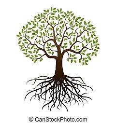 couleur, arbre chêne