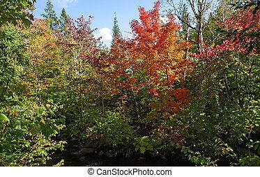 couleur, changer part, automne