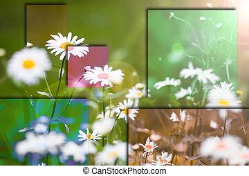 couleur, collage, arrière-plan vert, pâquerette